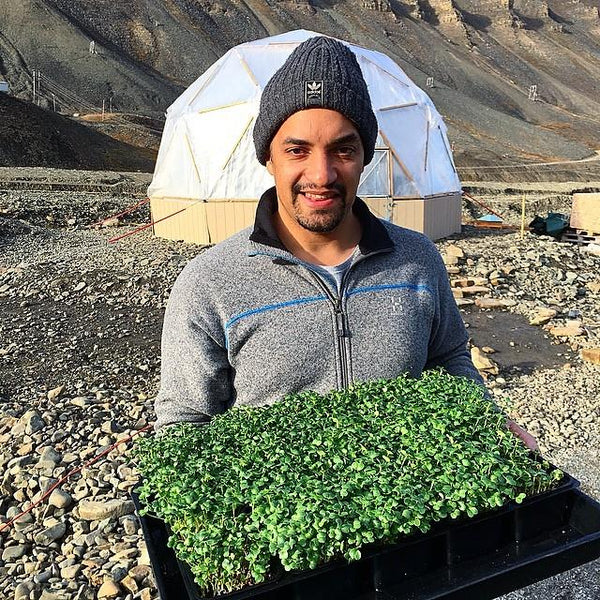 polar vegetables from svalbard