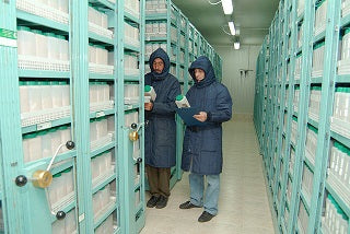 Tel Hadya genebank outside Aleppo Syria - photo by ICARDA