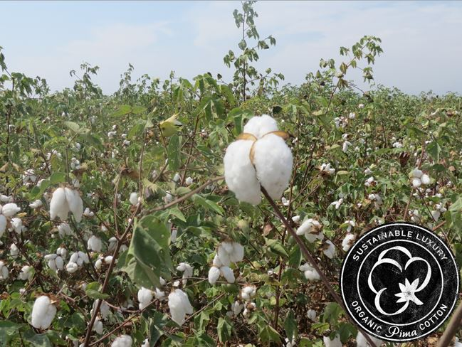 Not just organic, organic Pima cotton! What is organic Pima cotton?