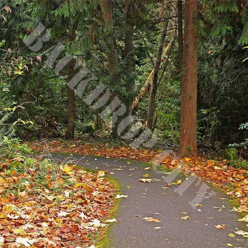 Fall Pathway Computer Printed Backdrop - Backdrop City