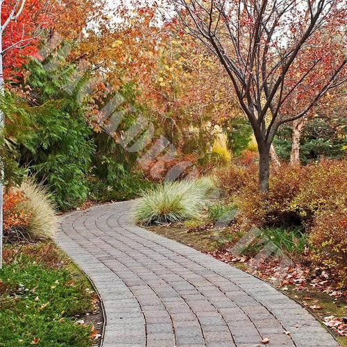 Autumn Pathway Computer Printed Backdrop - Backdrop City