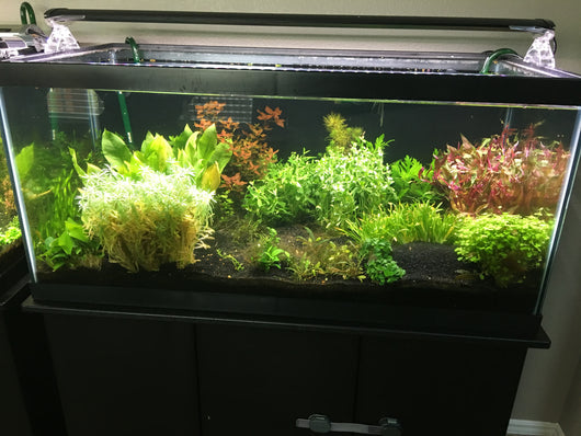 Low-Tech Plant Packages - Rice Family Aquatics