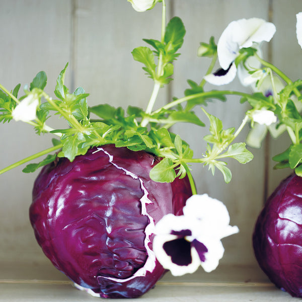 Red cabbage vase