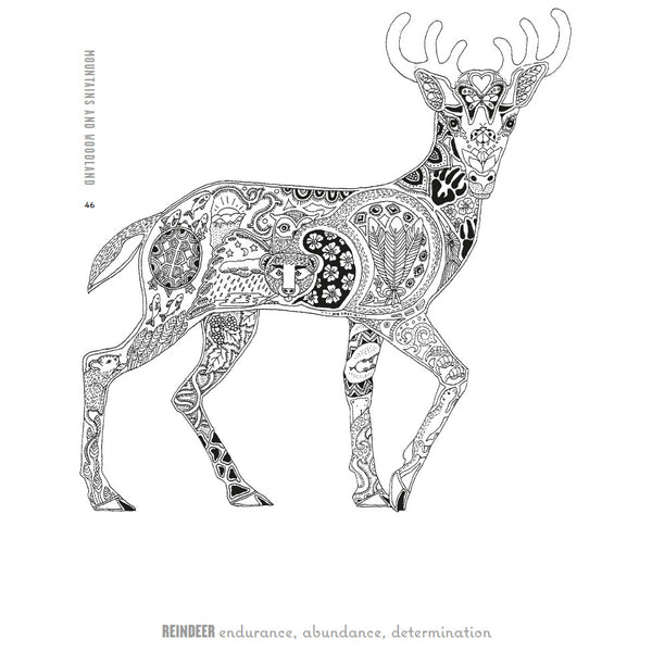 Adult colouring book stag illustration