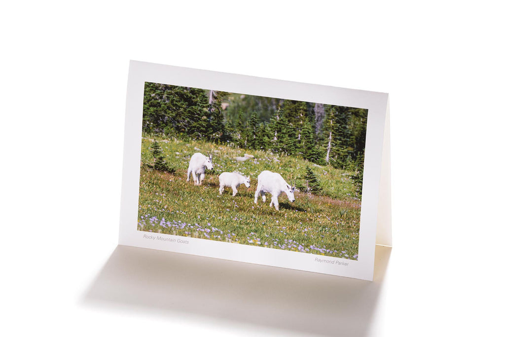 Rocky Mountain Goats (Greeting Card)