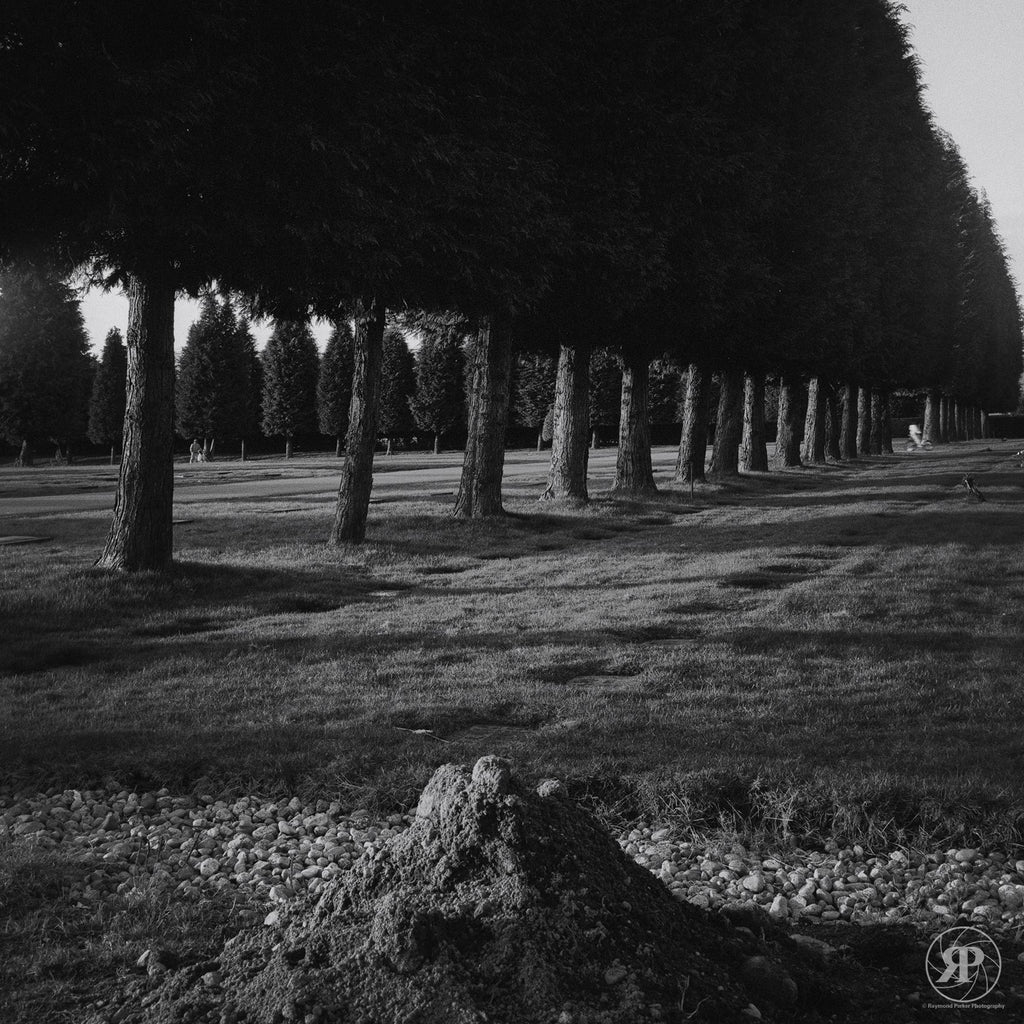Mountainview Cemetery, Vancouver, 1984 (Limited Edition Print)