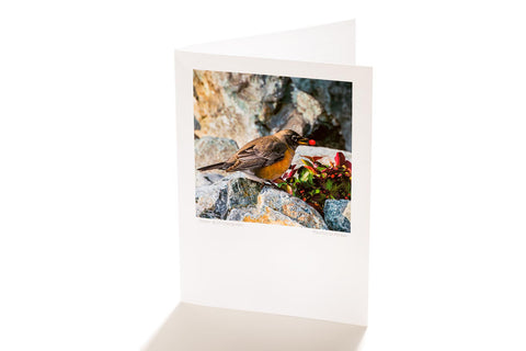 Robin & Wintergreen (Greeting Card)