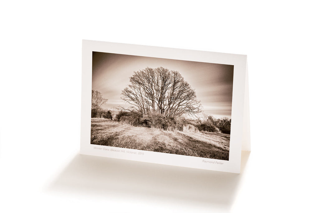 Winter Oaks (Greeting Card)