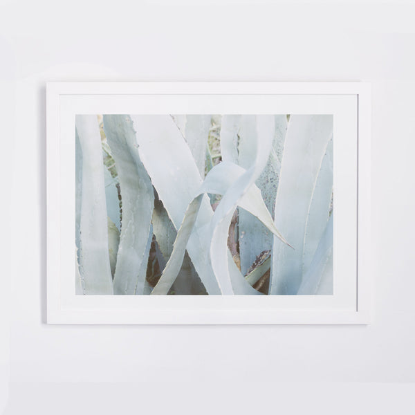 Fine Art Photography Print | Agave