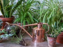 Indoor Metal Watering Can in Copper