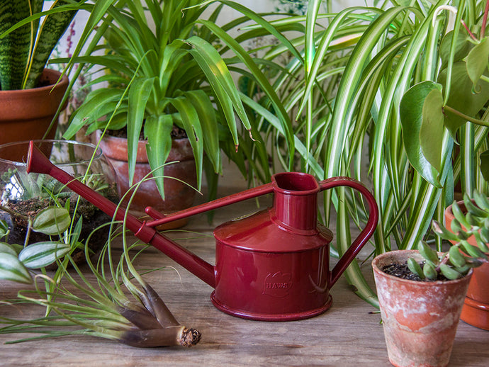 Burgundy Red Mini Watering Can