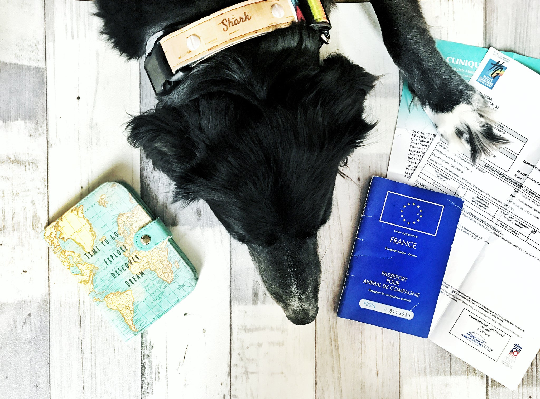 HOW TO: International Travel with your Pet this Summer!