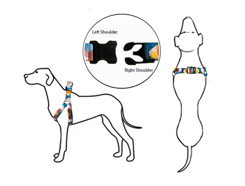 How to put on your pet's harness infographic