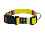 Yellow Blazer Standard Dog Collar