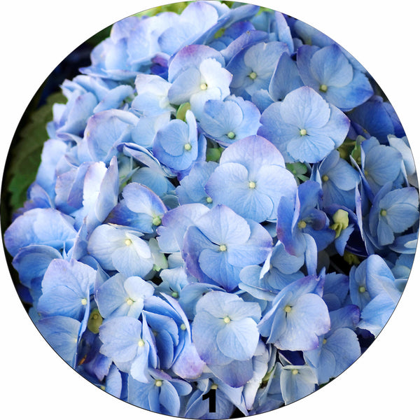 Alexandra Greene Flower collection Melamine Round Mats