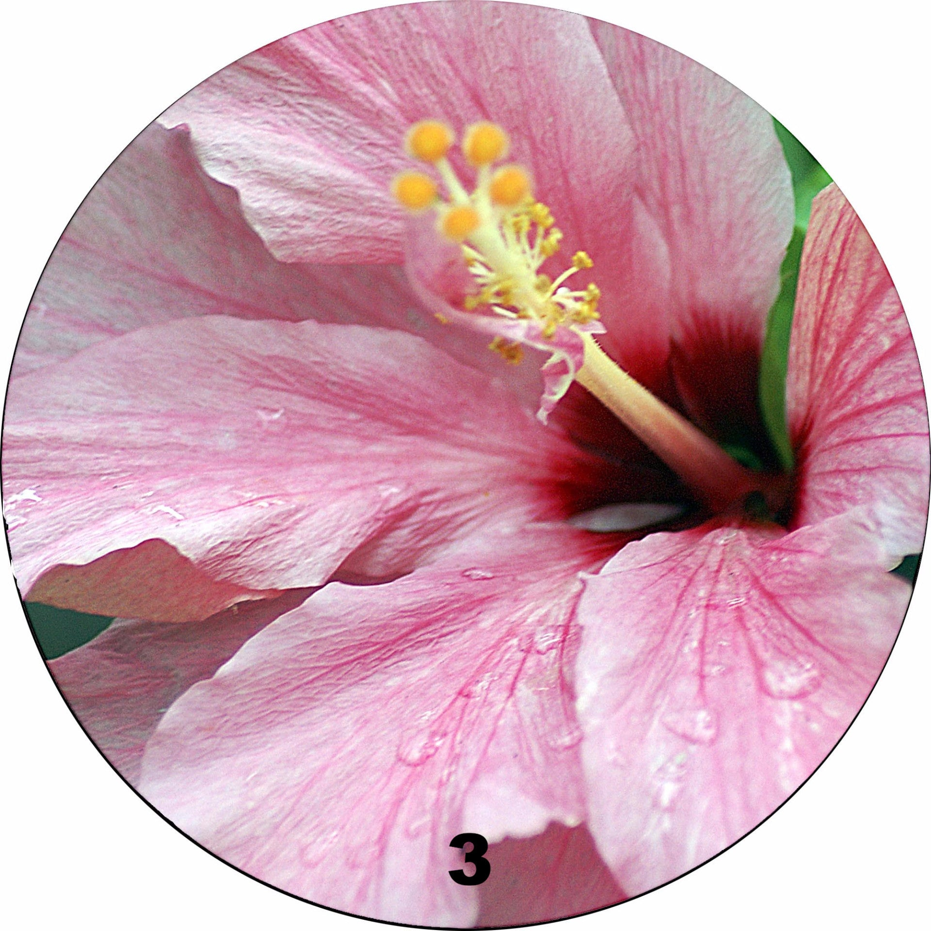 Alexandra Green Flower collection Melamine Round Mats