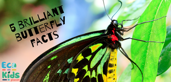 5 Brilliant Butterfly Facts
