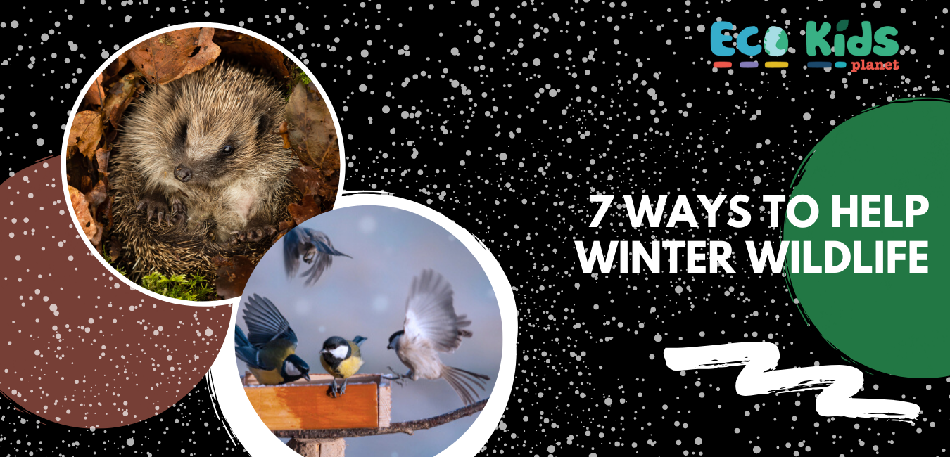 Seven Wonderful Ways to Help Winter Wildlife