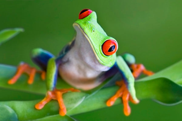 5 Fantastic Froggy Facts