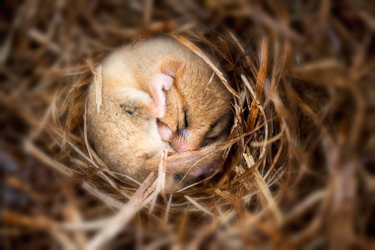 Science in the Park: Hibernation