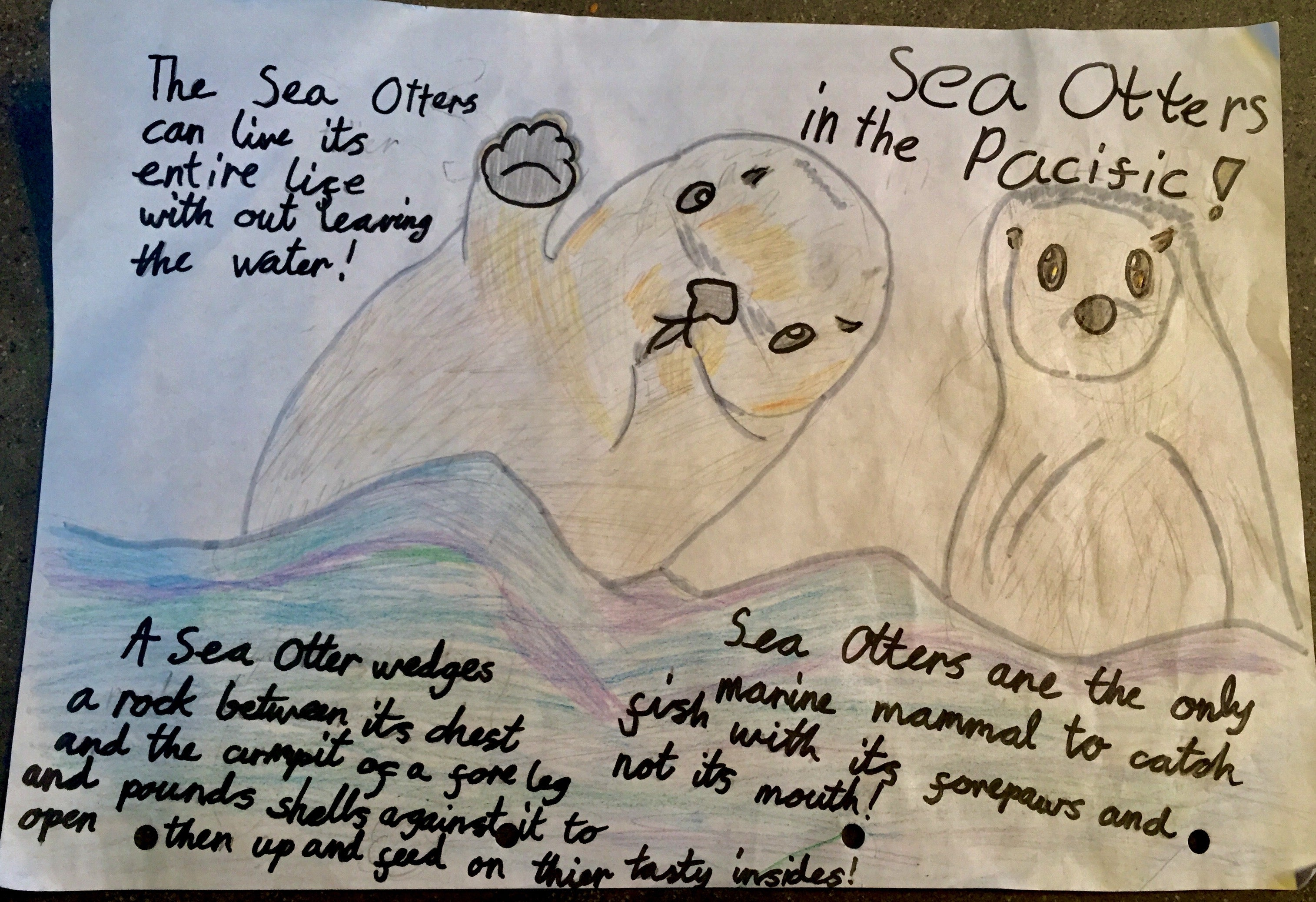 Pacific Ocean Creatures: Competition winners