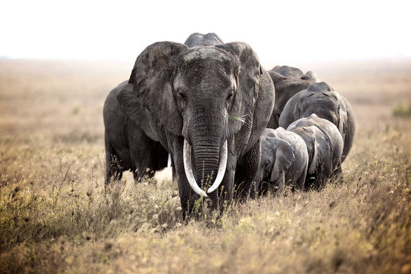 5 Reasons to Love Elephants on World Elephant Day