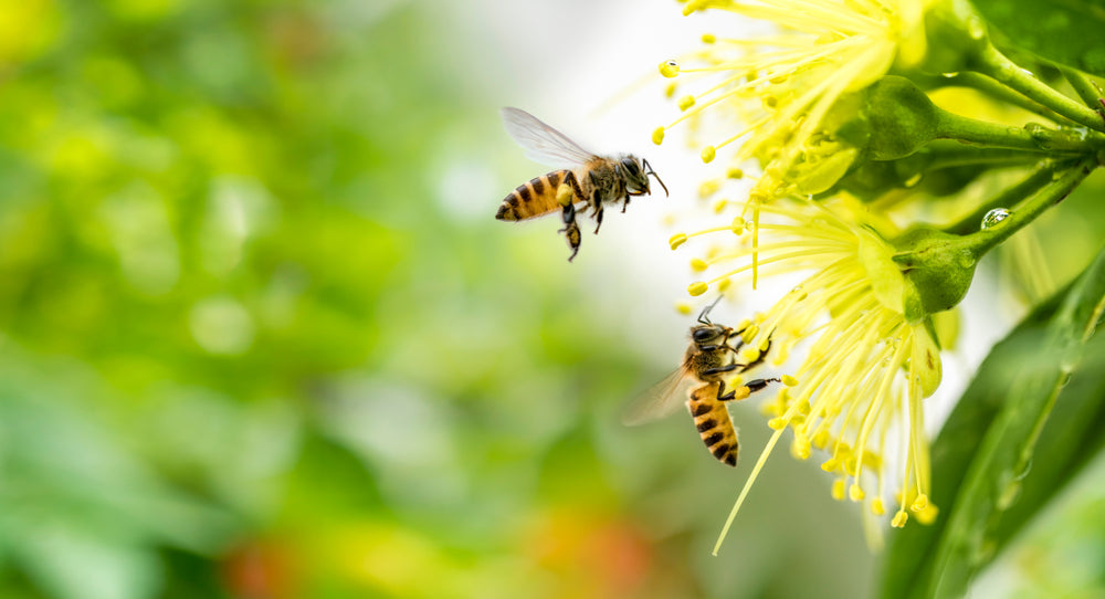 SEVEN BUZZING BEE FACTS