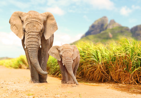 WORLD ELEPHANT DAY: THREE SPECIAL SPECIES