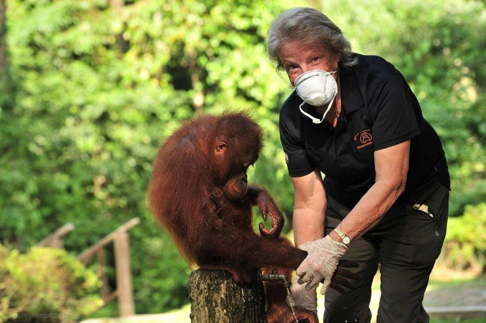 Interview with Orang-utan Fairy Godmother, Sue Sheward