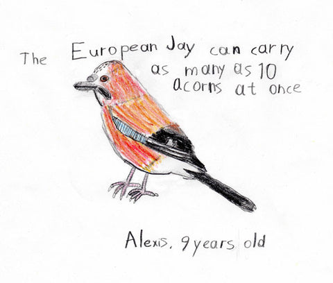 european-jay-children-drawing