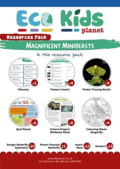 Maginificent Minibeasts