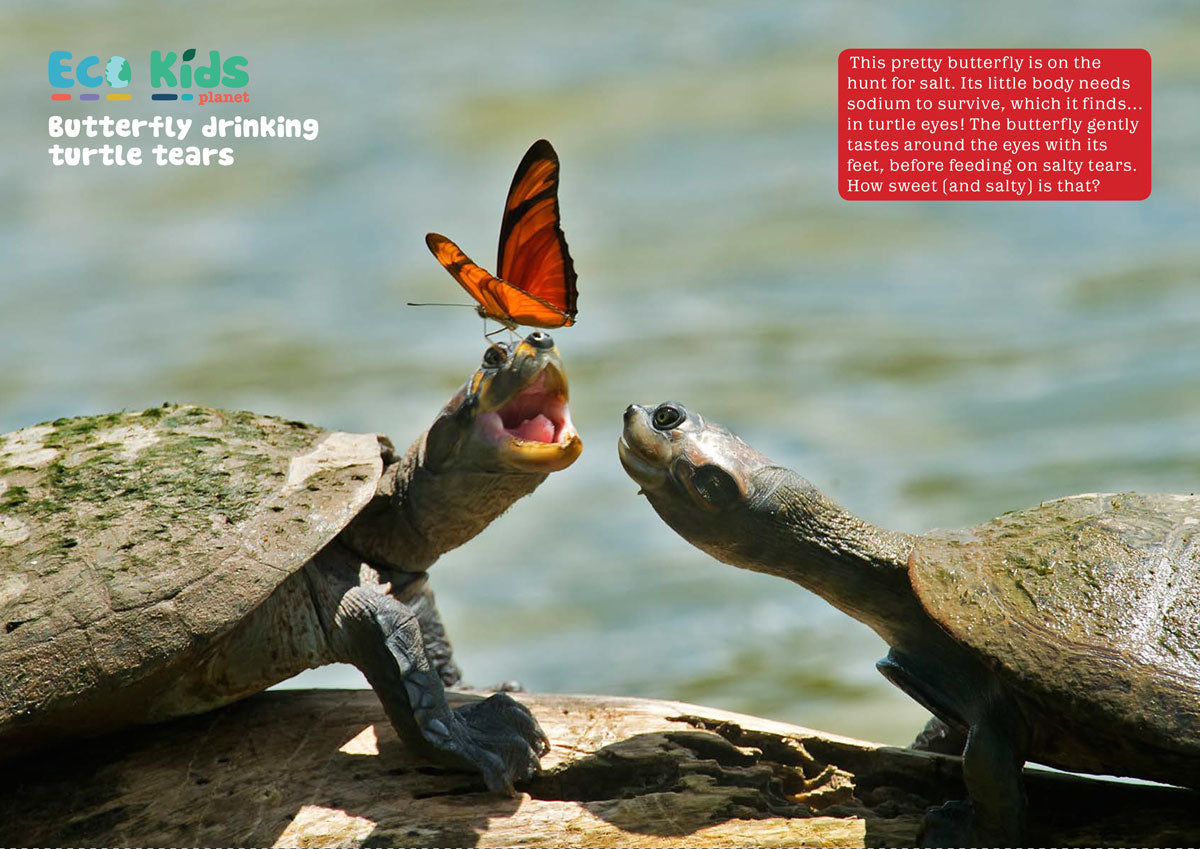 butterfly-and-turtle