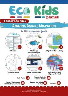 Amazing Animal Migration
