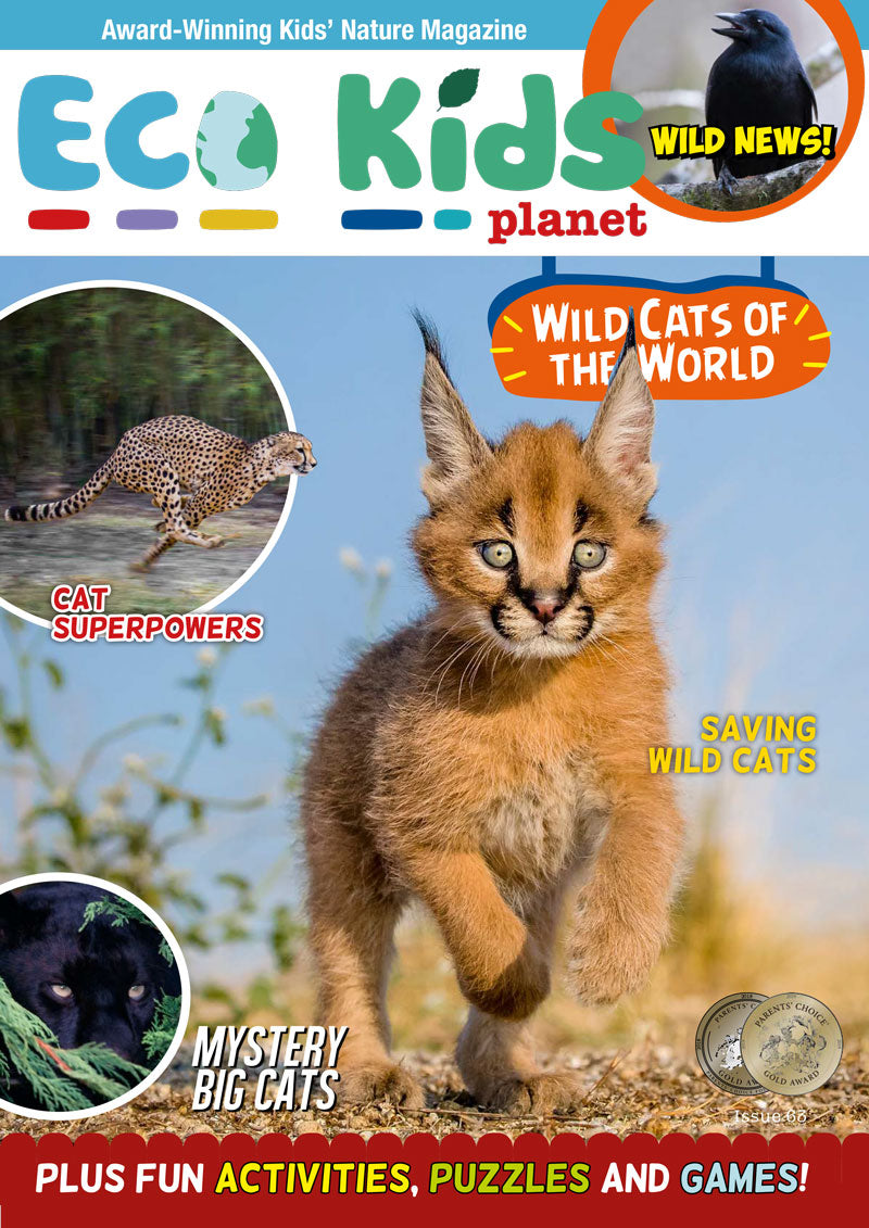 Kid's Nature Magazines – Issue 63 – Wild Cats of the World
