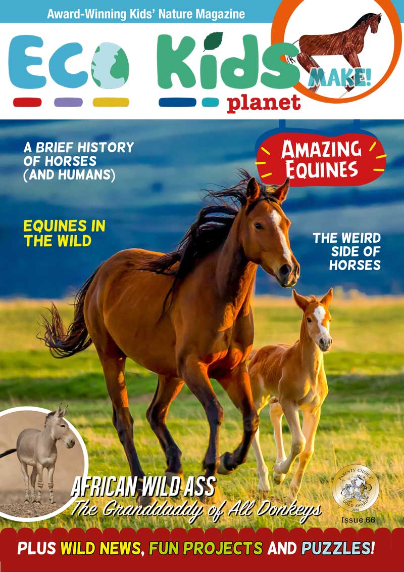 Kid's Nature Magazines – Issue 66 – Amazing Equines
