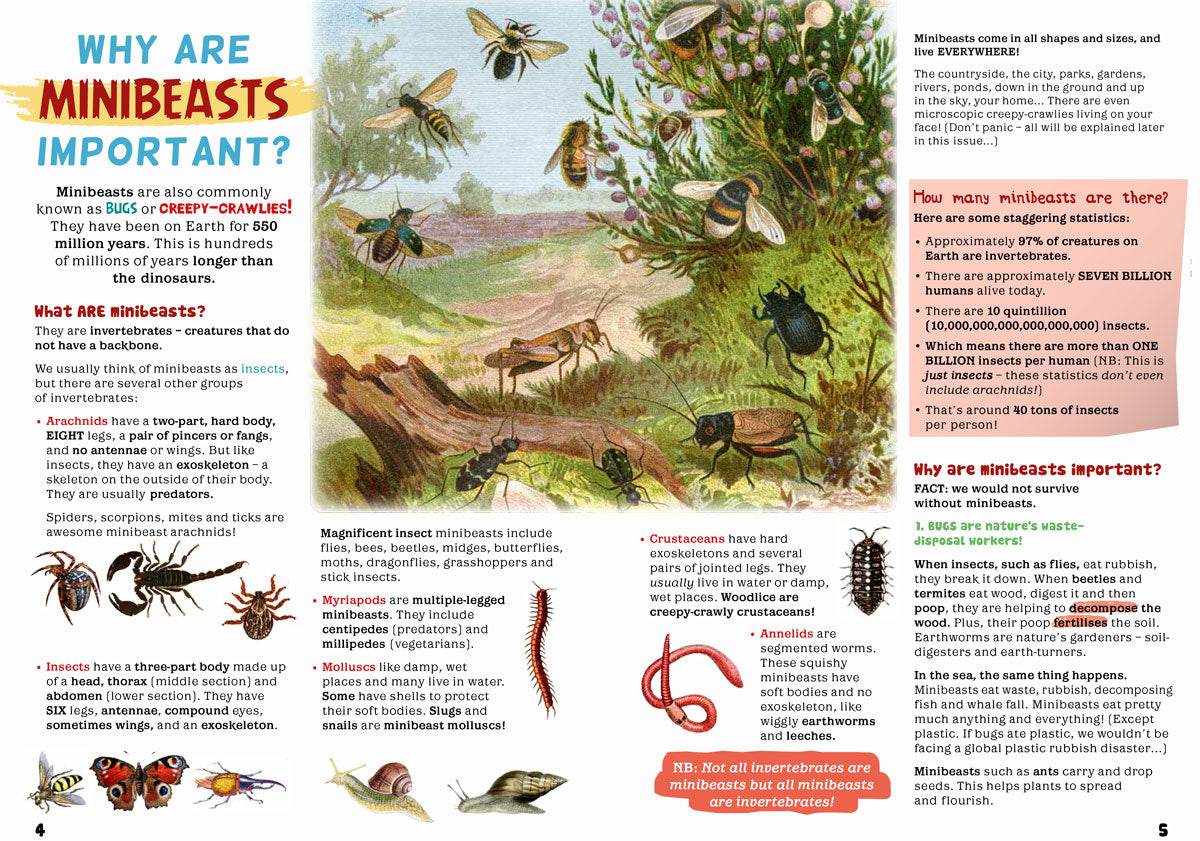 Endangered Feature Creature: The Ladybird Spider - Eco Kids