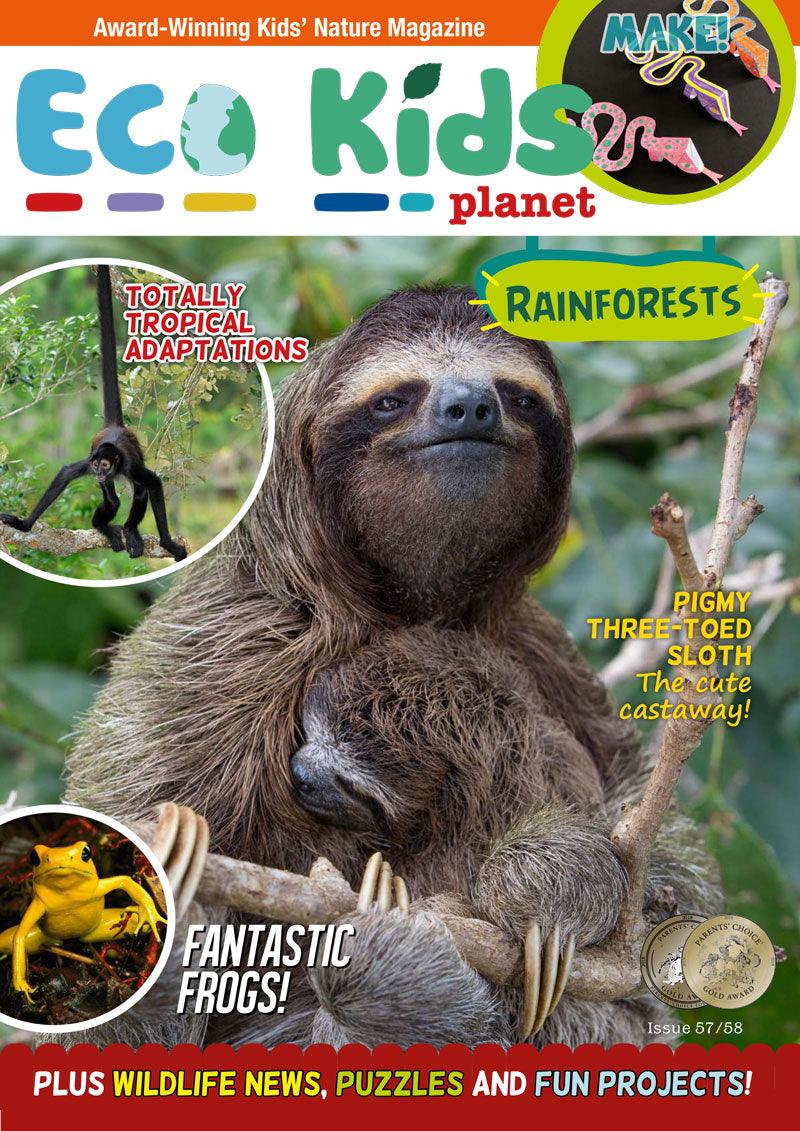 Kid's Nature Magazines - Issue 57/58 - Rainforests