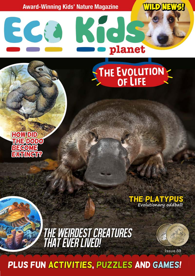Kid's Nature Magazines - Issue 59 - The Evolution of Life