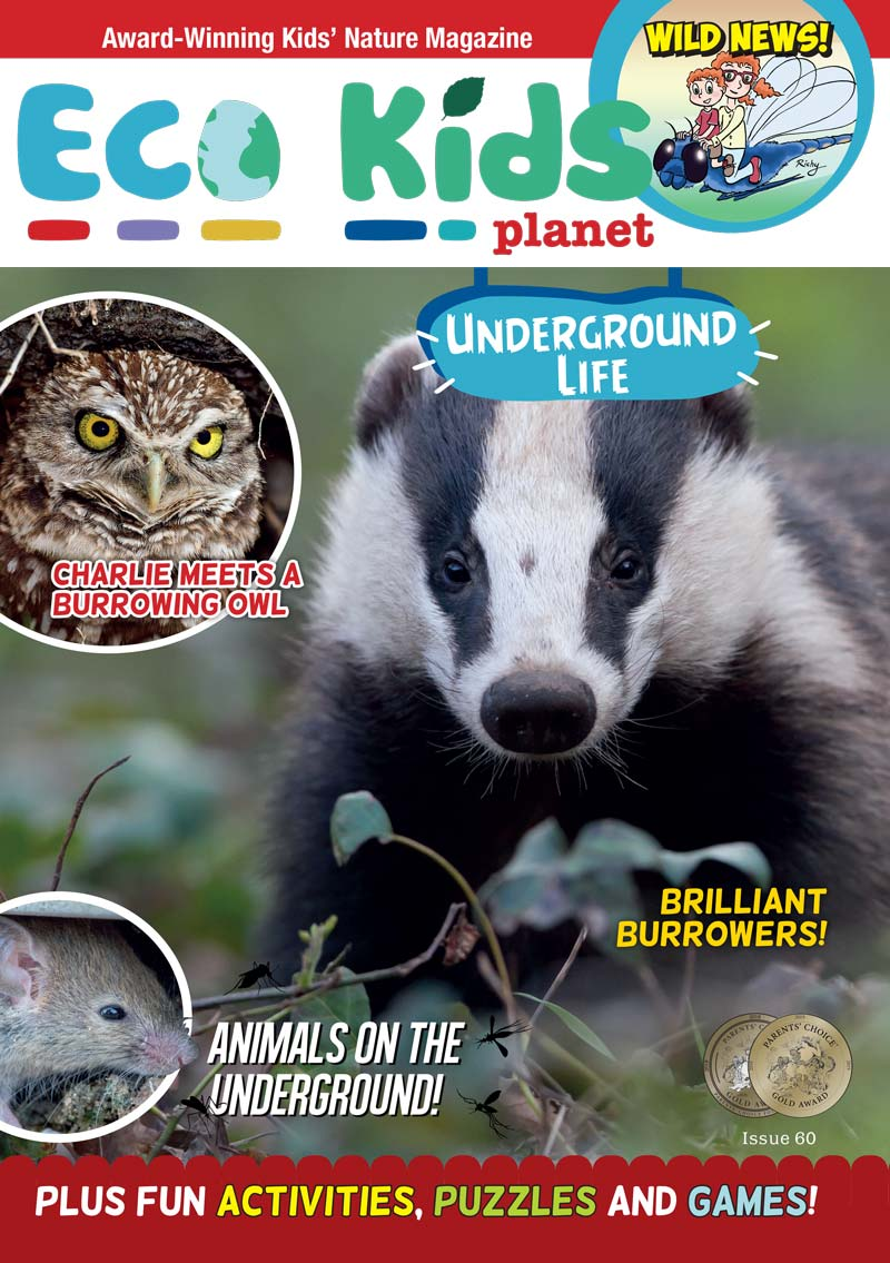 Kid's Nature Magazines - Issue 60 - Underground Life