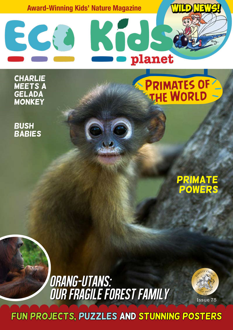 Kid's Nature Magazines – Issue 75 – Primates of the World