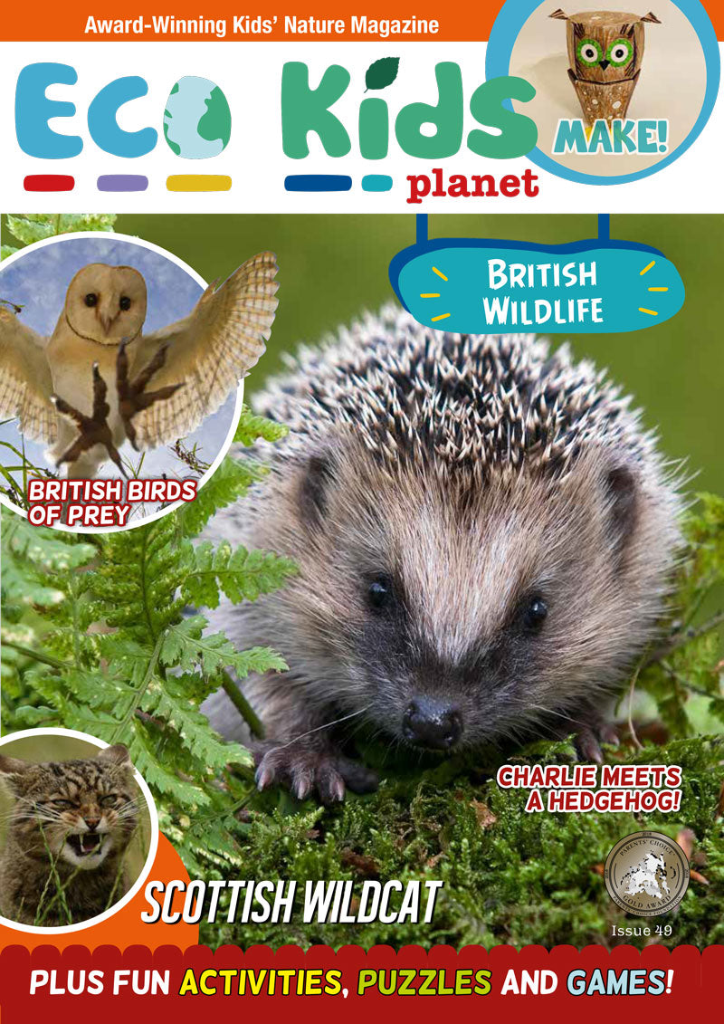 Kid's Nature Magazines - Issue 49 - British Wildlife