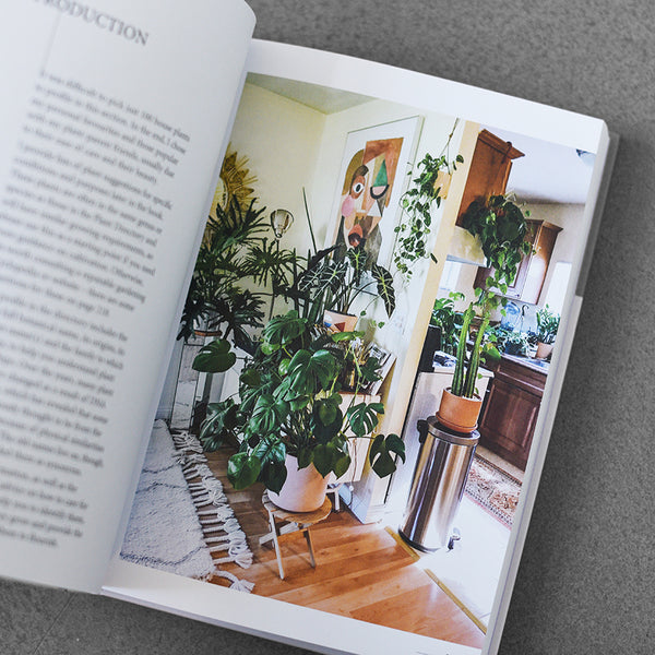 Plant, House plants, choosing, styling, caring HB