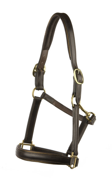 Padded Leather Halter/Headstall