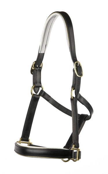 Padded Halter/Headstall with White Padding and Gold Piping