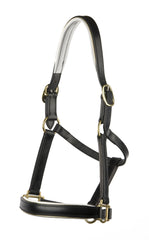 Padded Halter/Headstall with White Padding and Gold Piping - Mal Byrne Performance Saddlery