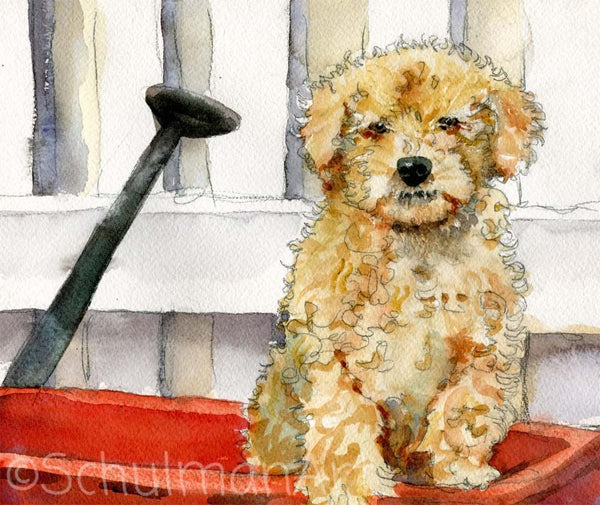 Poodle Puppy, Original Watercolor Art