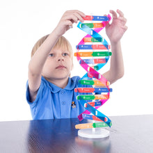 Load image into Gallery viewer, Human DNA Models For Kids