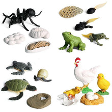Load image into Gallery viewer, Animals Growth Cycle Figures Toy