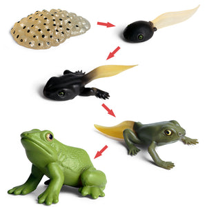 Animals Growth Cycle Figures Toy