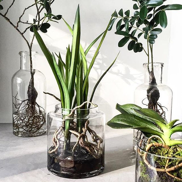 HK Living | Rooted cymbidium orchid vase | House of Orange Melbourne
